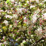Eternal spring