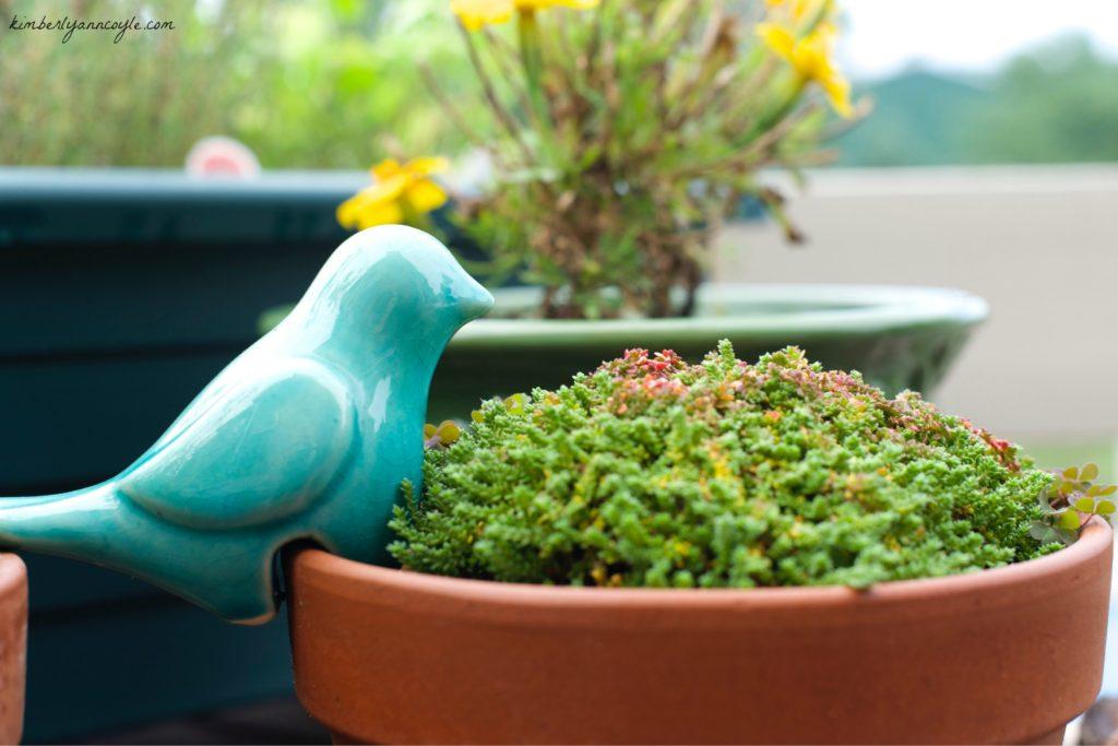 perch via kimberlyanncoyle.com