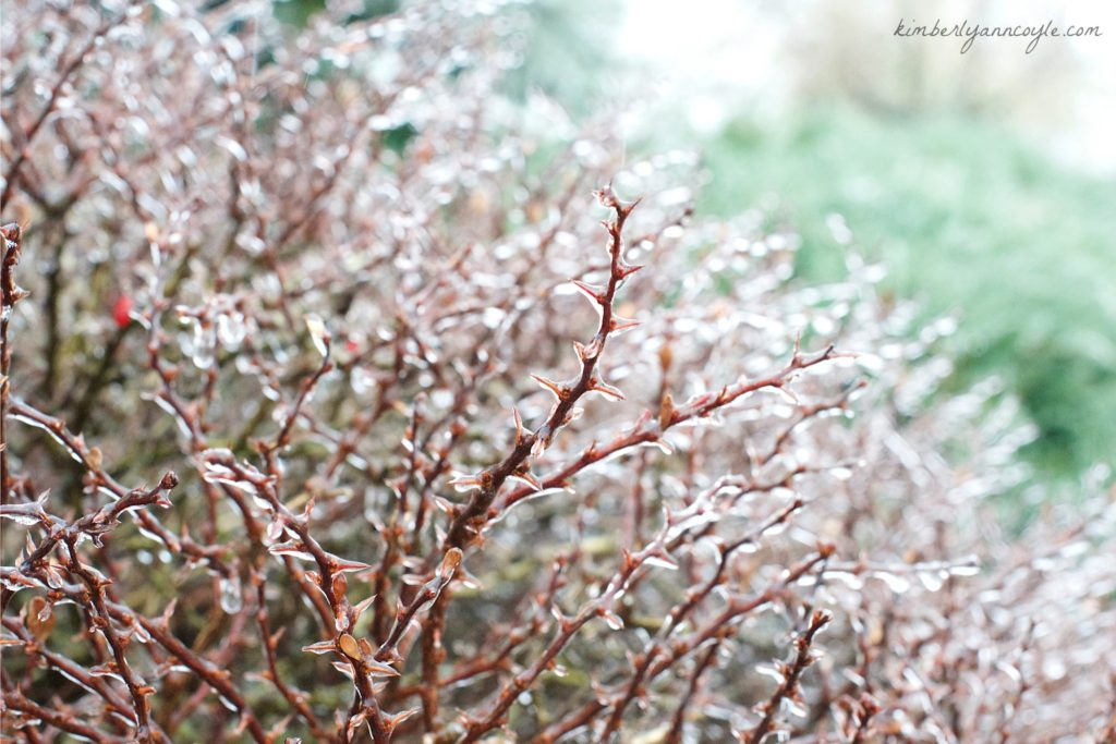 ice and thorns via kimberlyanncoyle.com